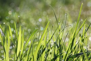 Cheap Auckland lawn mowing service